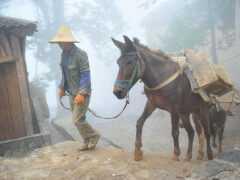 雲南少有人知的2個古村,住蘑菇房馱運靠馬幫,宛如生活在古代