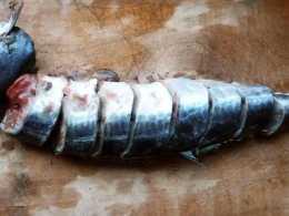 休漁期臨近,海鮮市場上遇到這魚要抓緊吃,一年之中這時最鮮