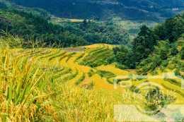 江西地處最偏遠的縣,一村森林覆蓋率達90%,梯田美如畫適合旅居